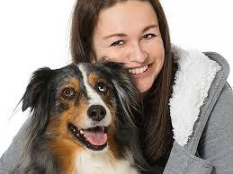 australian shepherd vomiting dog urinary tract infection