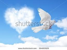 beautiful flying white dove on blue stock photo 135786263