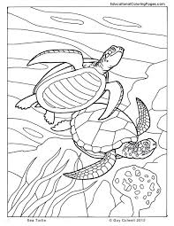 coloring print outs colouring pages 10 ocean animals coloring