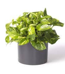 top house plants indoor plants houston chronicle