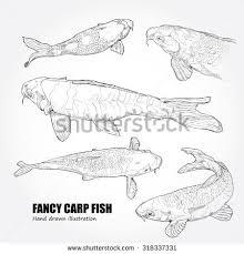 fish drawing stock images royalty free images u0026 vectors