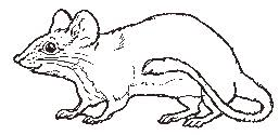 the mitten coloring page mouse coloring page
