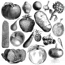 garden fruit and vegetable illsutrations antique farming food