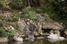 bonsai landscape at the morikami japanese garden clippix etc