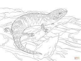 juvenile eastern blue tongued skink coloring page free printable