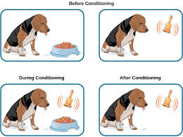 classical conditioning boundless psychology