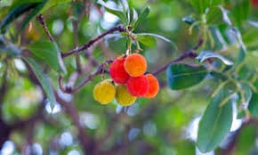 ask alys fowler should i make space for my strawberry tree
