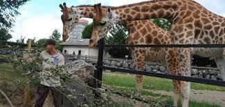chambre d hote maubeuge le zoo de maubeuge gîte val joly avesnois chambres d hôtes à