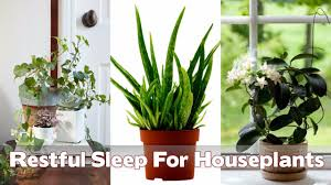 14 best houseplants for a restful sleep youtube