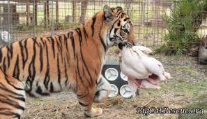 7 absolutely insane animal defense mechanisms mental floss
