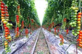 fancy inspiration ideas home vegetable garden remarkable with