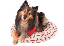 Dog Peed On Bed The Guide To Washing A Dog Bed Petmd