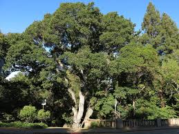 live oak park berkeley wikipedia