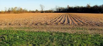 Mississippi landscapes images View from federal twist mississippi delta landscape a reading JPG