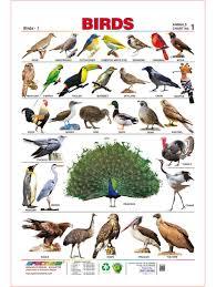 spectrum pre kids learning laminated birds name educational