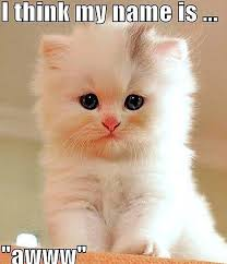 Cute Memes - funny cute angry cat memes collection for friends family