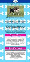 bluetick coonhound classifieds best 25 treeing walker coonhound ideas on pinterest walker