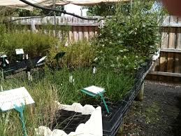 native plants nursery melbourne greenlink community nursery melbourne