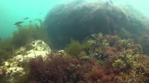 Rhode Island snorkeling images Green bridge newport ri 6 16 2014 video dive log jpg