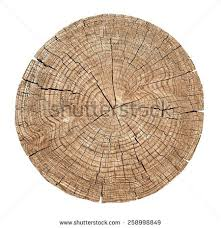 cross section tree trunk showing growth stock photo 258998849