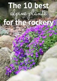 10 Perennials That Thrive In by Best 25 Alpine Plants Ideas On Pinterest Decorate With Plants