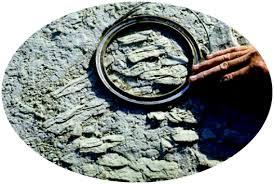 Sedimentology And Geochemical Evaluation Of Geoenergy
