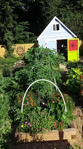 vegetable garden organic compost soil u0026 fertilizer soil3