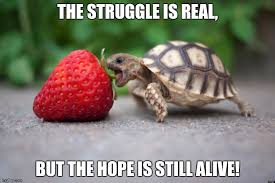 The Struggle Is Real Meme - image tagged in turtles imgflip