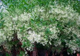 trees for front yard ornamental trees best tree for front yard