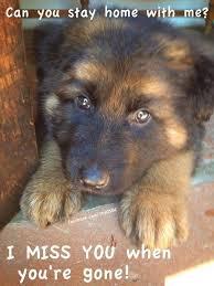 boxer dog in heaven 1171 best images about a pets love on pinterest rainbow bridge