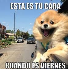 Meme Viernes - los mejores memes usados este año de ya es viernes mxq noticias