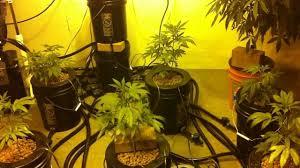 4000watt indoor medical marijuana grow room youtube