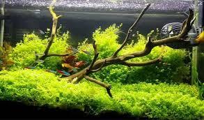 membuat aquascape bening aquascape notepam
