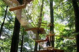 Massachusetts forest images A new forest adventure park is open in massachusetts jpg