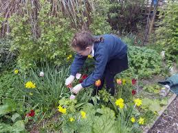 gardening club september 2016 clifton primary