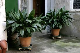 the 7 best houseplants for your bachelor pad goodnet
