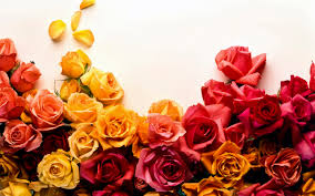 colorful roses beautiful colorful roses flowers wallpaper 2880x1800
