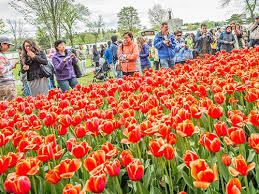 canadian tulip festival a world of tulips