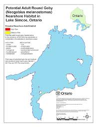 risk assessment of round goby neogobius melanostomus to lake