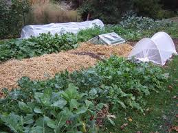 Fall Vegetable Garden Ideas Protective Devices For Fall And Winter Vegetable Gardens Veggie