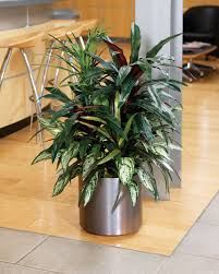 floor plants home decor large artificial plants for indoors up your decor with