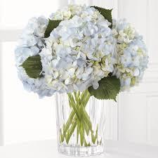 white hydrangea bouquet blue hydrangeas toronto flower delivery ital florist