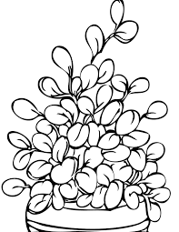 potted plant coloring pages contegri com
