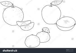 apples oranges tangerines coloring illustration winter stock