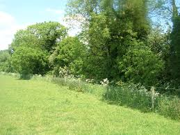 native hedgerow plants hedgerows habitat ecolandscapes landscaping with native irish