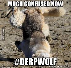 Moon Moon Memes - much confused now derpwolf muddy moon moon meme generator