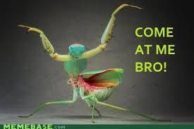 Mantis Meme - memebase praying mantis page 3 all your memes in our base