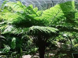 15 popular types of ferns