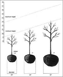 fallowfield tree farm caliper chart web jpg