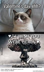 grumpy cat valentines 30 grumpy cat meme pictures and photos
